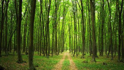 Forêt participative